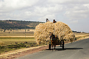 cart laden with straw. Photographed in Ethiopia, Africa