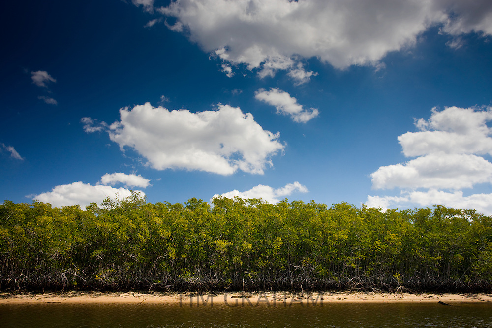 Mangroves, Ten Thousand Islands, Florida Everglades, USA