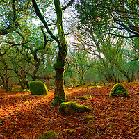 County Kerry Forest Panorama Ireland / ba089