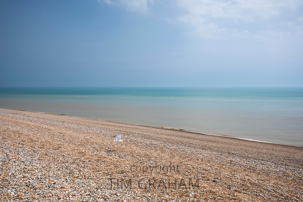 Lone gull flying over shingle on the pebbly beach at Dungeness in Kent, UK