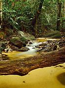 Small stream running through tropical rain forest at Alang Sedayu north of Kuala Lumpur, Malaysia.