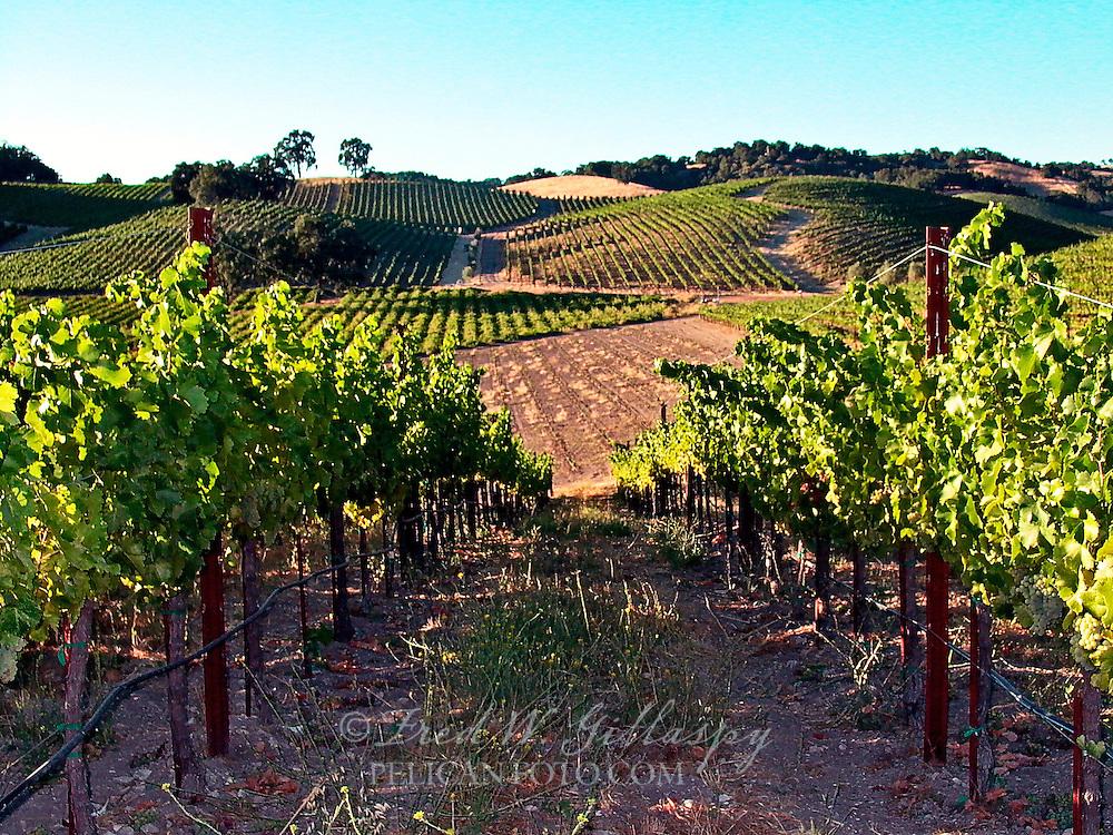 Paso Robles Vineyards - Tablas Creek
