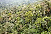 Montane oak forest at Mesilau Nature Resort, Kinabalu National Park, Sabah