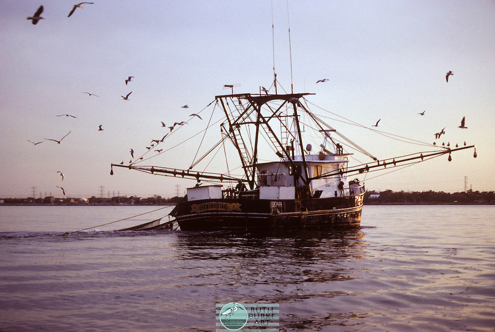 The shrimp fishery is a major global industry, with more than 3.4 million tons caught per year, chiefly in Asia. Rates of bycatch are unusually high for shrimp fishing, with the capture of sea turtles being especially contentious.