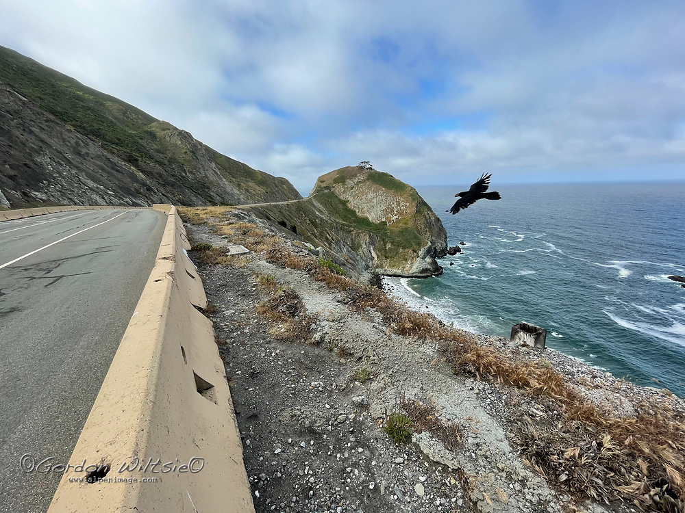 A crow flies over n abandoned section of California Highway 1 that winds through The Devils Slide south of San Francisco.