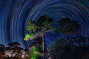 Stars circle the Northern Star in between twin Long Leaf Pine trees in North Carolina's night sky.  PHOTO BY: JEFF JANOWSKI PHOTOGRAPHY