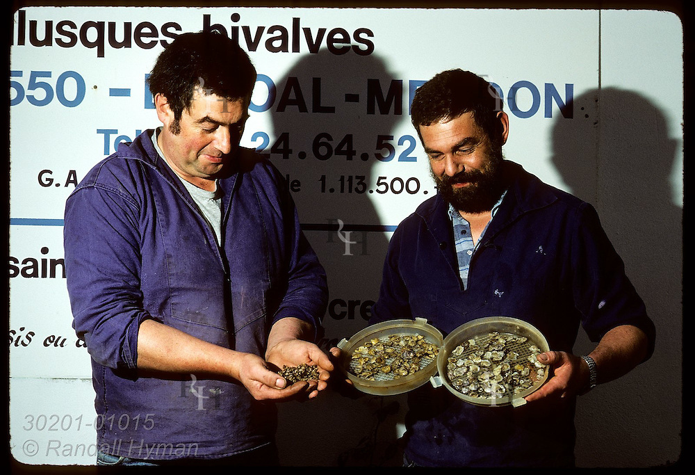 Brothers Patrick & Didier Varloteaux w/ baby flat oysters raised in their hatchery; Morbihan. France