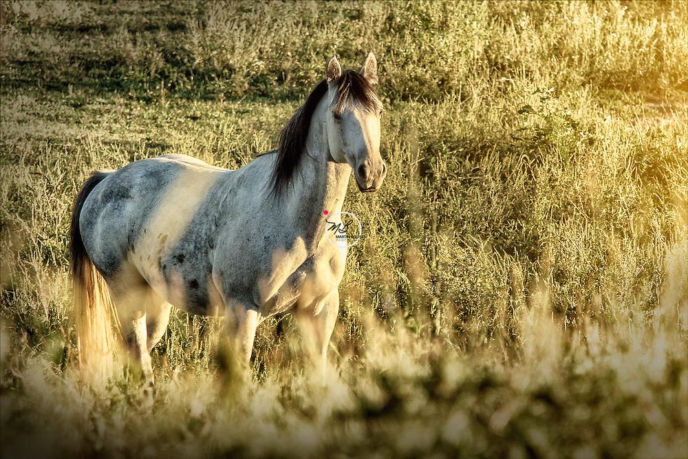 Horse Named Whiskey