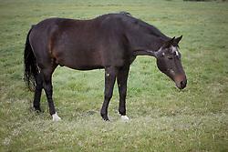Senior Horse<br /> Fred in de weide - Kieldrecht 2005<br /> Photo© Dirk Caremans