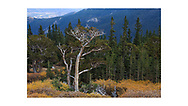 Mount Evans, Colorado, USA
