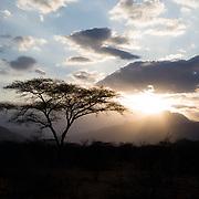 Grevy's Zebra in Northern Kenya's Samburu Region