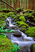 "Small creek near Sol Duc Falls.  The name Sol Duc means ""magic waters"". The Sol Duc River is divided into 3 or 4 separate streams (depending on flow) by an irregular rocky ledge. The water drops about 25 feet over the ledge into a tight cleft, making a 90 degree angle turn. The river passes beneath a footbridge, then drops about 10 feet into a deep teal pool."