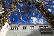 Palm Trees in the Courtyard reach for the sky