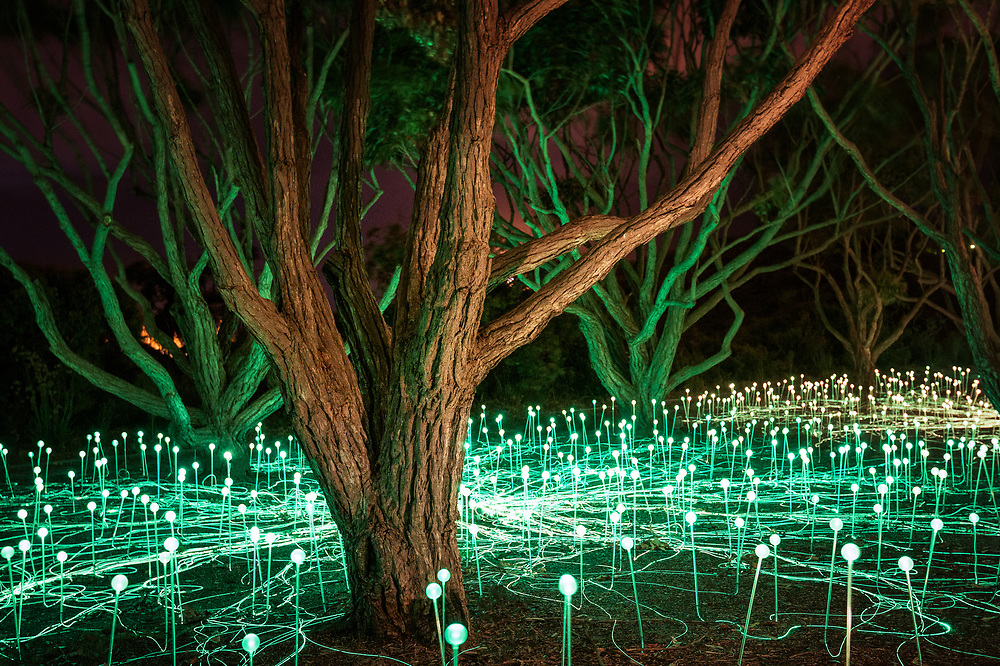 The Field of Light: Avenue of Honour is an immersive art installation by Bruce Munro illuminating the Avenue of Honour at Mount Clarence, Western Australia