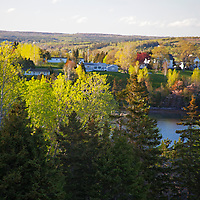 North America, Canada, Nova Scotia, Guysborough. Sunlit trees welcome spring in Guysborough.