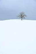 Ein Obstbaum auf einem Hügel in der Drumlinlandschaft am Hirzel, Kanton Zürich, Schweiz<br /> <br /> A fruit tree on a hill in the Drumlin landscape at Hirzel, Canton Zurich, Switzerland