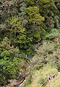 Suspension bridge over Mesilau River in Mesilau Nature Resort, Kinabalu National Park, Sabah