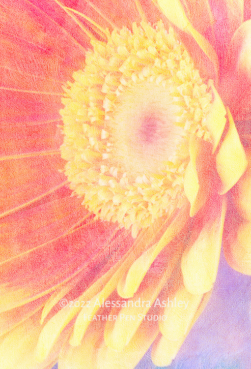 Yellow-tipped petals of Gerbera daisy oriented toward light.  Macro photograph composited with painted art paper texture.