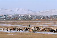 Mongolie. Province de Töv en hiver. Troupeau devant la ville de Zuunmod. // Mongolia Töv province in winter. Cattle outside the town of Zuunmod.
