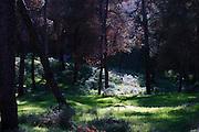 Israel, Jezreel Valley, Mount Gilboa