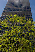Healthy green leaves sprout from a tree below a tall office skyscraper, a scene of economic prosperity, growth and recovery. We look up at the tall structure whose dark surfaces reflect passing clouds while below, the tree's new leaves look more verdant after season rainfall.