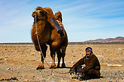 A nomad leading his Bactrian camel over a snowy landscape in the remote Gobi Desert of Mongolia, Gobi Desert, Mongolia