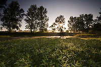 Large-flower primrose willow (Ludwigia grandiflora) beds at Etang des Boires, an old oxbow of the river Allier, at sunrise.  Pont-du-Chateau, Auvergne, France.