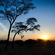 The sun disappears behind the horizon at Tarangire National Park in northern Tanzania not far from Ngorongoro Crater and the Serengeti.
