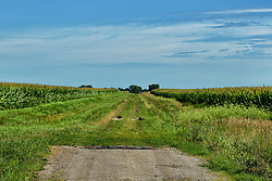 Where the blacktop ends, a grass road continues between a cornfield and a field of soybeans.