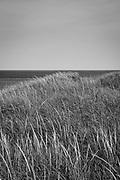 Dunes overlooking the Atlantic Ocean in Truro, Massachusetts