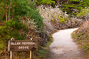 Allan Memorial Grove on the Cypress Grove Trail, Point Lobos State Reserve, Carmel, California