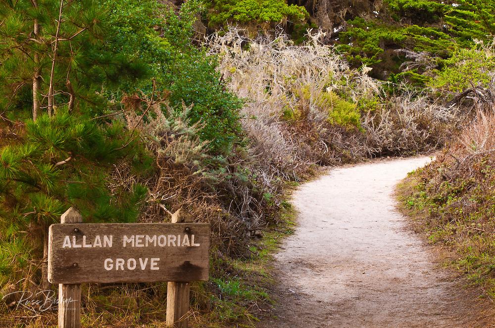 Allan Memorial Grove on the Cypress Grove Trail, Point Lobos State Reserve, Carmel, California