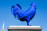 Hahn/Cock, a sculpture of a giant blue cockerel by the German artist Katharina Fritsch. Trafalgar Square, London.