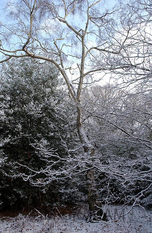 Snow covered trees on Hampstead Heath, London
