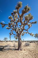 Beautiful desert landscape of Joshua Tree national park.