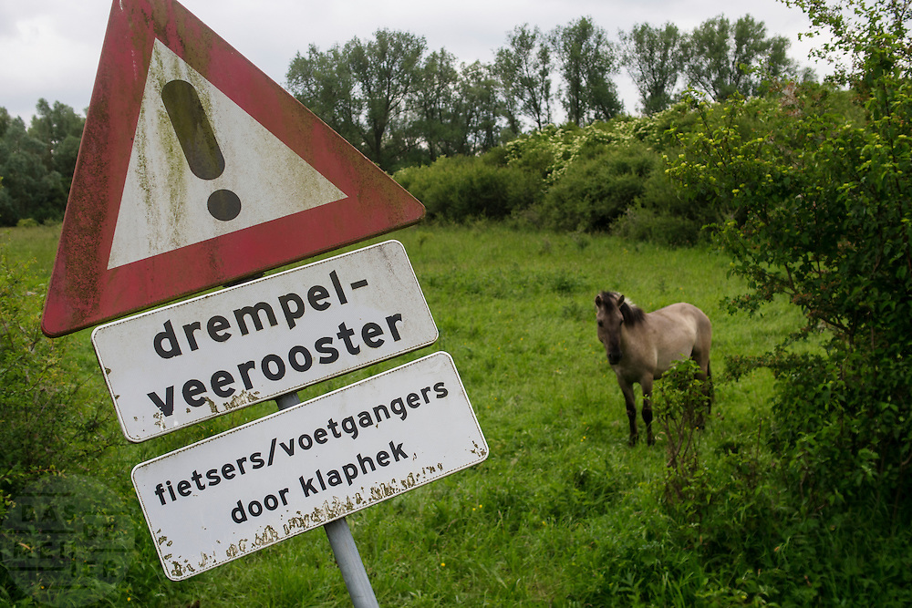 Een Koniks paard bij een bord voor een veerooster in de Ooijpolder bij Nijmegen.<br /> <br /> A koniks horse near a sign for a cattle grid in the Ooijpolder near Nijmegen.