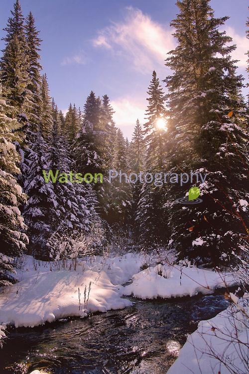 Winter Hush in the Light