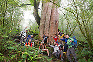 The BIG tree..Jialuo Lake, May, 2013