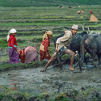 Villagers prepare to plant rice in paddies in the Pokhara Valley, Nepal.