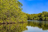 mangrove of Padre Ramos natural reserve in Chinandega Nicaragua