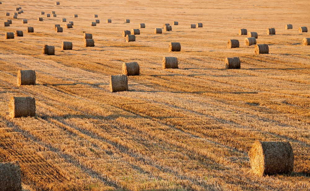 Summer field with bales of hay after the harvest
