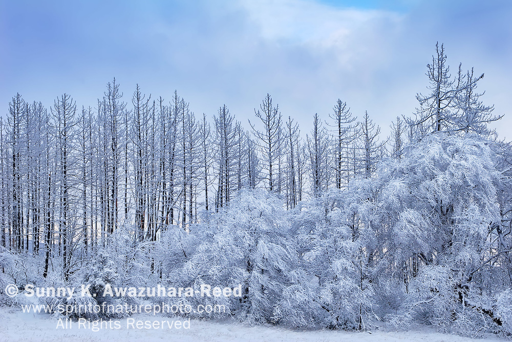 Very rare snowy landscape at Cuyamaca Rancho State Park, California
