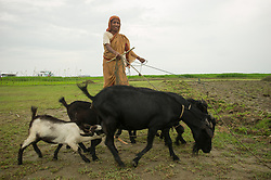 Children and women herd their goats along the remote char of Borovita, June 20, 2010. The village of Borovita lies in the middle of the Brahmaputra river in the northwestern chars of Bangladesh. Bangladesh is among the most densely populated countries in the world, with a population of more than 140 million. It is a small country where 28,000 people live per square kilometer. The majority of the country is made up of the massive estuary delta of the Ganges, Brahmaputra and Meghna Rivers. Any rise in ocean levels represents a grave danger to the country. Approximately 10 million people live in parts of Bangladesh lying less than a meter above current sea levels.