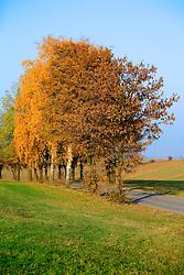 CZECH REPUBLIC VYSOCINA LUBNA 31OCT09 - Tree-lined rural road near the village of Lubna, Policka, Vysocina, Czech Republic...jre/Photo by Jiri Rezac..© Jiri Rezac 2009