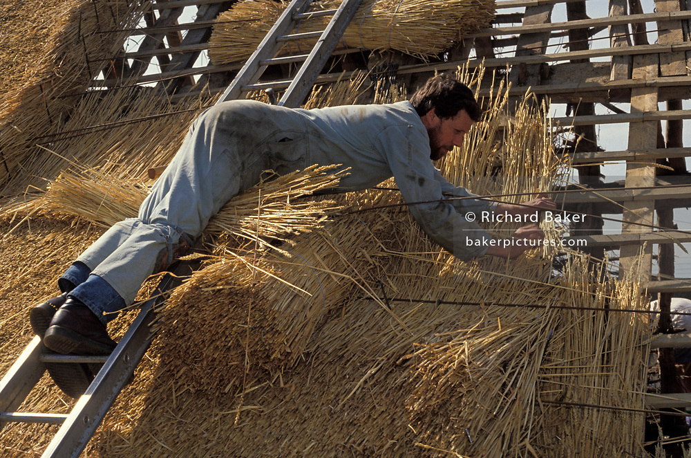 Balancing across the width of the roof's surface, a traditional thatcher lays water reed on to the roof of a Suffolk cottage in afternoon sun, on 16th August 1993, in Suffolk, England. He uses a Shearing Hook to lay the straw into the outer weathering coat of the roof's slope. Using techniques developed over thousands of years, good thatch will not require frequent maintenance. In England a ridge will normally last 10–15 years. Thatching is the craft of building a roof with dry vegetation such as straw, water reed, sedge (Cladium mariscus), rushes and heather, layering the vegetation so as to shed water away from the inner roof. It is a very old roofing method and has been used in both tropical and temperate climates.