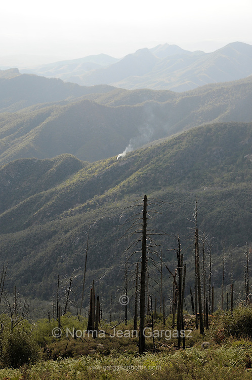 A small forest fire caused by lightning burns on Mount Lemmon in the Santa Catalina Mountains of the Coronado National Forest, a Sky Island in the Sonoran Desert, north of Tucson, Arizona, USA.