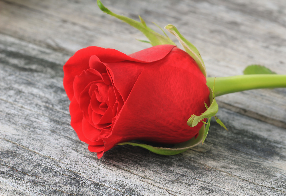 """""""Single Red Rose""""<br /> <br /> Beautiful red rose on a wooden table."""