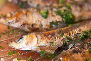 Grilled sardines in a restaurant in Collioure on the Mediterranean coast in Roussillon, French Catalonia. Collioure. Roussillon. Grilled sardines with potato gratin. France. Europe.