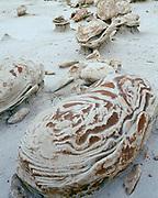 Variegated sandstone boulder at Cracked Eggs, Bisti Badlands, Bisti/De-Na-Zin Wilderness, San Juan Basin, New Mexico.