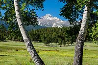 14,255 ft. Longs Peak as seen from Upper Beaver Meadows, Rocky Mountain NP,  CO.
